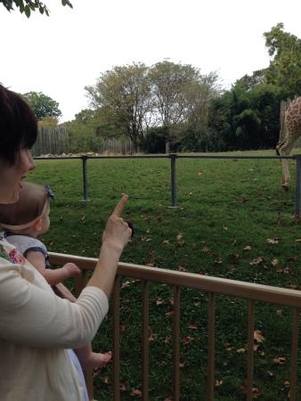 e_giraffe